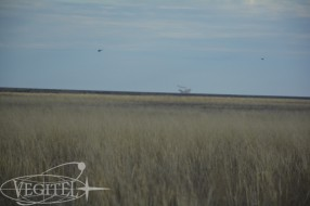 soyuz_ms_01_landing_tour_13
